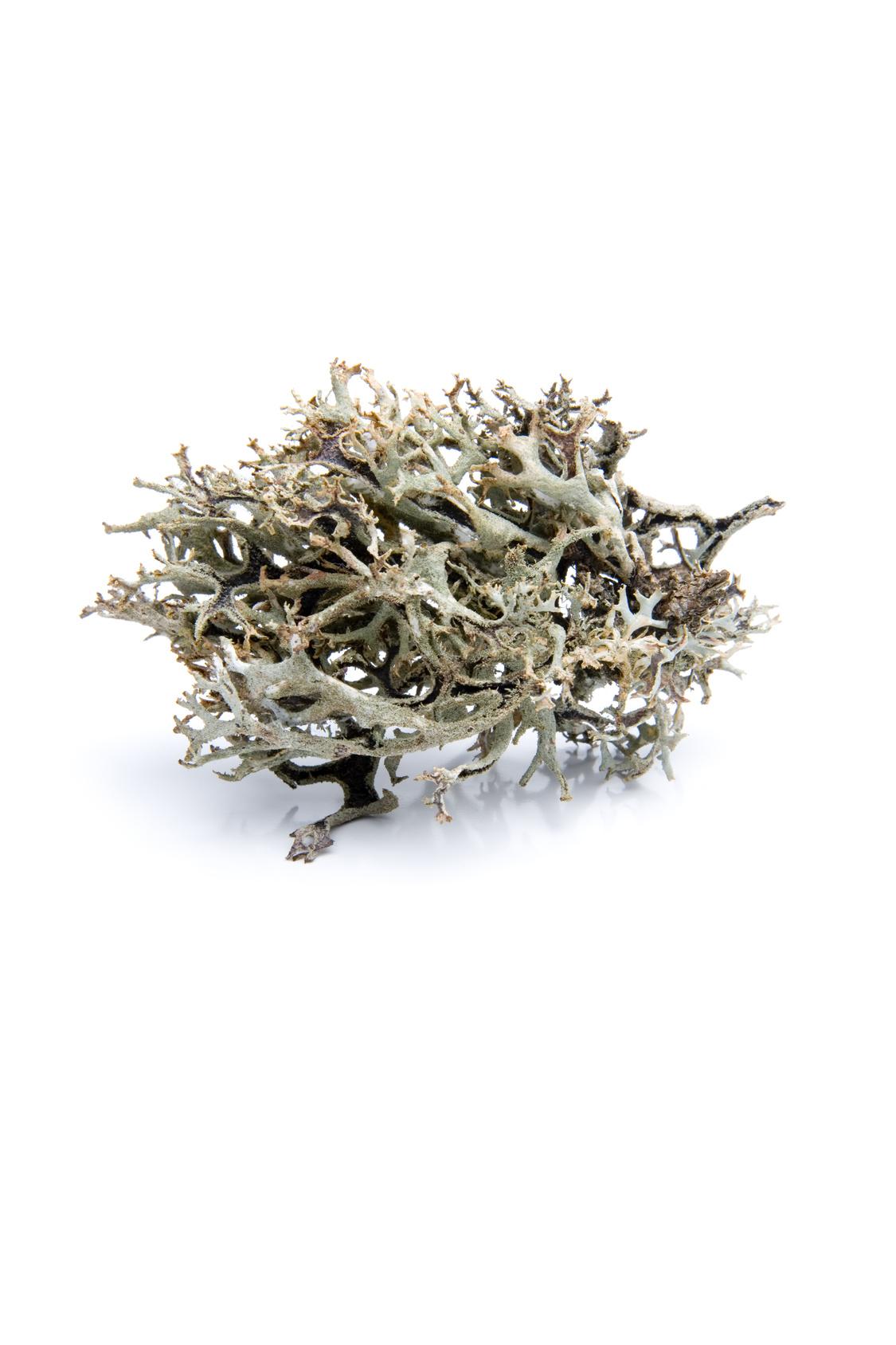 vitamine D3 du lichen boréal